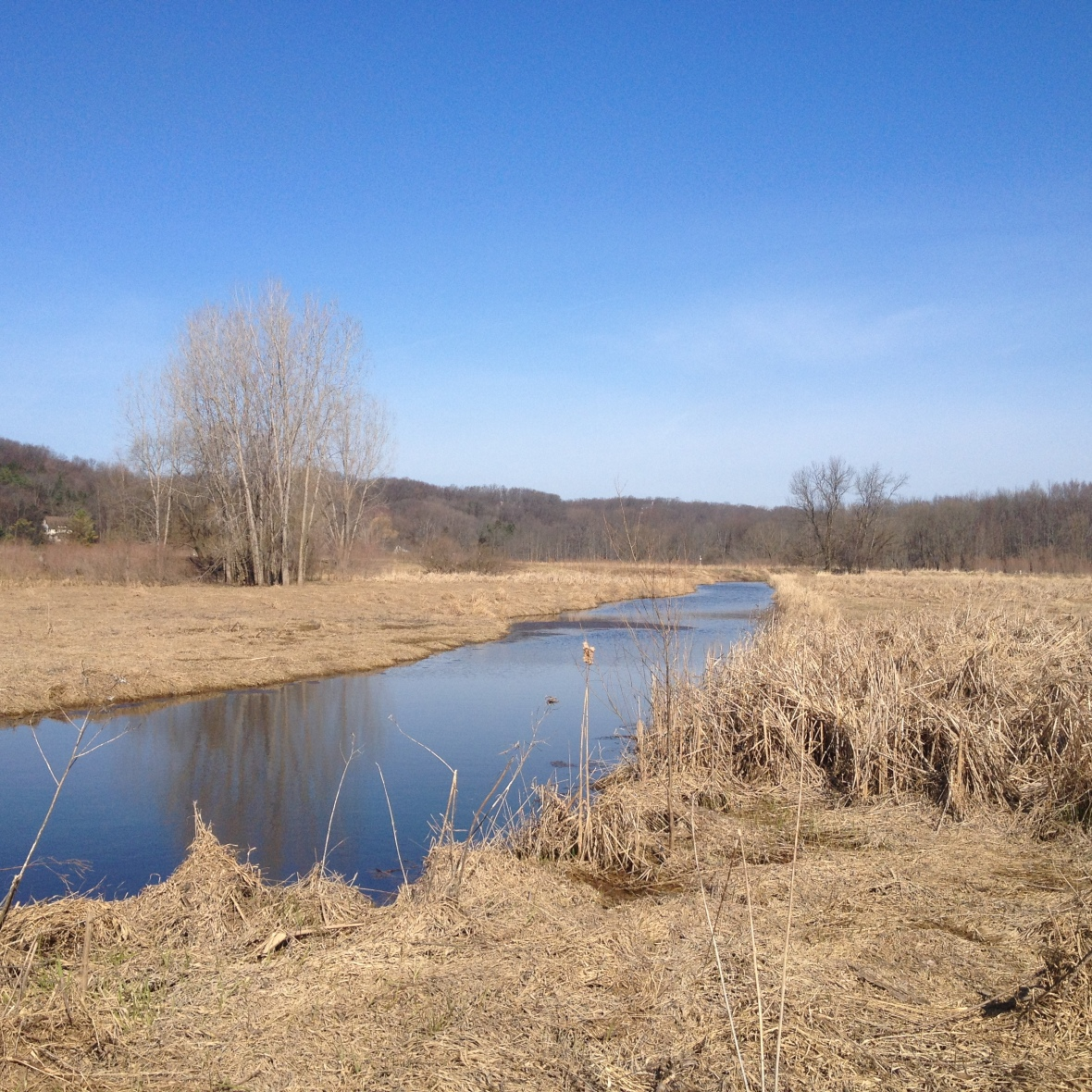 Early spring nettles can be found along creek banks and riverbeds. Make sure to gather nettles upstream from farms or any factory to avoid pollution.