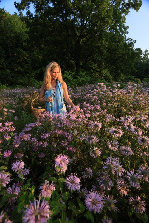 Lisa M. Rose in a field of wildflowers in Millineum Park.